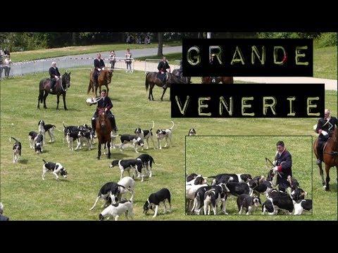 Démonstration de Grande Vénerie (Dimanche) _ Championnat de France du chien de race (Nantes)