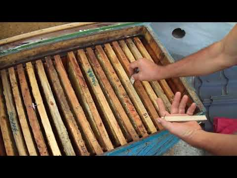 Пчеловодство: про полоски от моли !