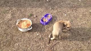 Покормили щенков и собак .Может кто хочет взять себе щенка?
