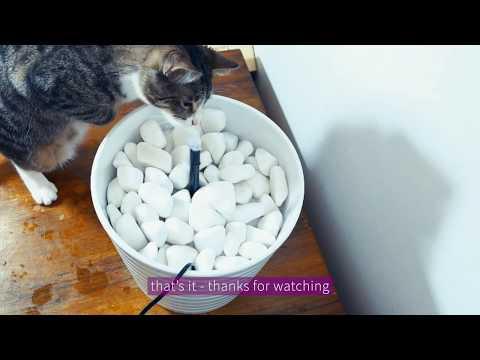 DIY Cat water fountain