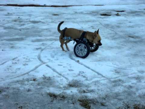 Can Dogs Go On Bethany Beach