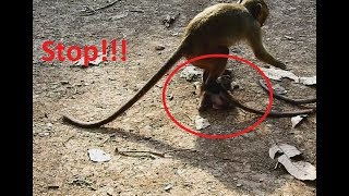 Oh! No Stop! Small monkey do so Bad on baby Donny Hurt Very Much.