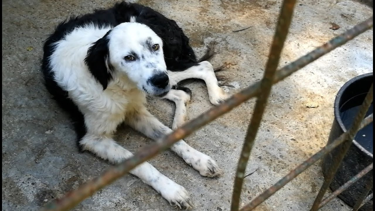 rescue-of-a-scared-lonely-dog-whose-heart-was-crying