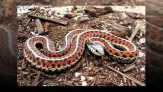 Змеи в природе