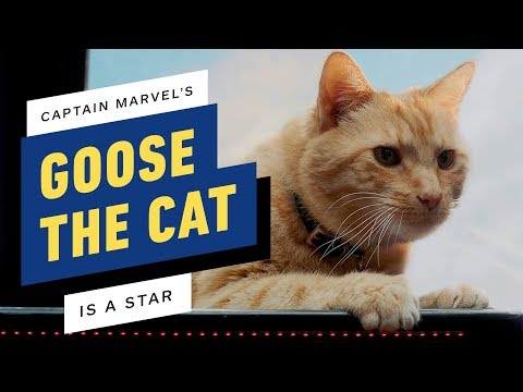 Captain Marvel's Goose Was the Biggest Star on Set