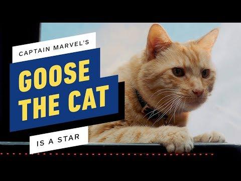 Captain Marvel's Goose Was The Biggest Star On Set