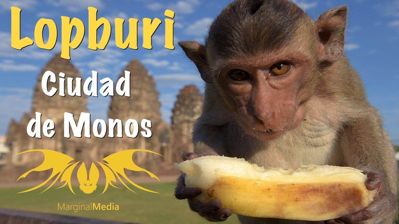 Monos Corriendo en la Ciudad de Lopburi por Falta de Comida