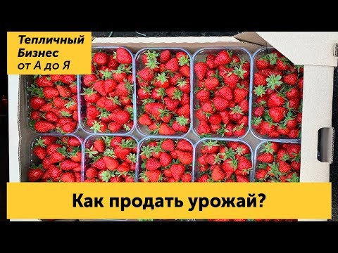 Как продать урожай? Сбыт ягоды и оптовый рынок в Славянске