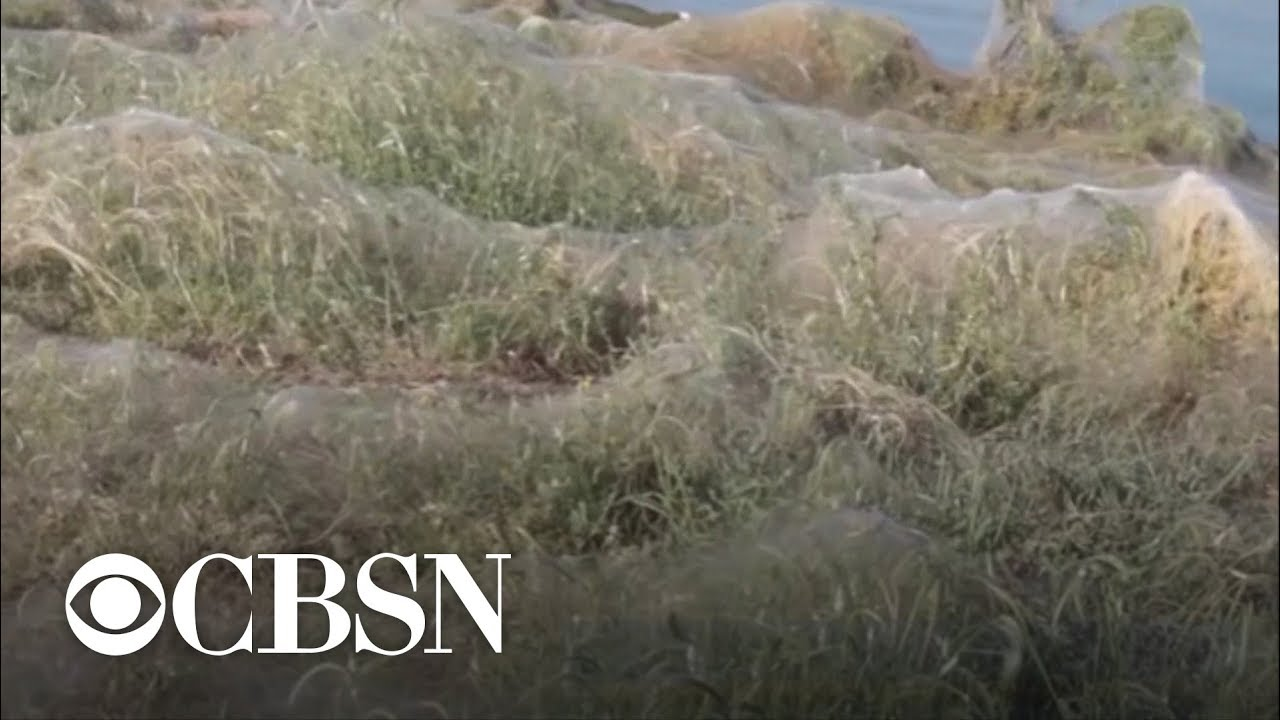 Yuck! Massive spiderweb blankets Greek beach