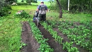 Окучивание картошки мотоблоком Нева самодельным окучнтком(, 2015-09-27T14:26:08.000Z)