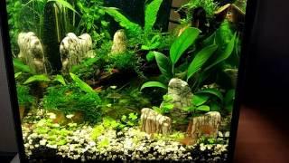 Нано аквариум 20 литров