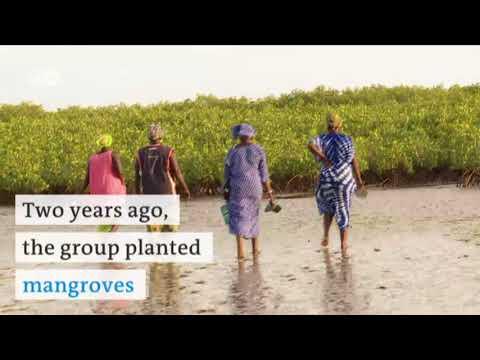 Fighting erosion in Senegal | DW English