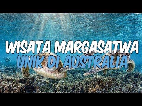 9-wisata-margasatwa-unik-di-australia,-jangan-lewatkan-berenang-bersama-hiu-paus