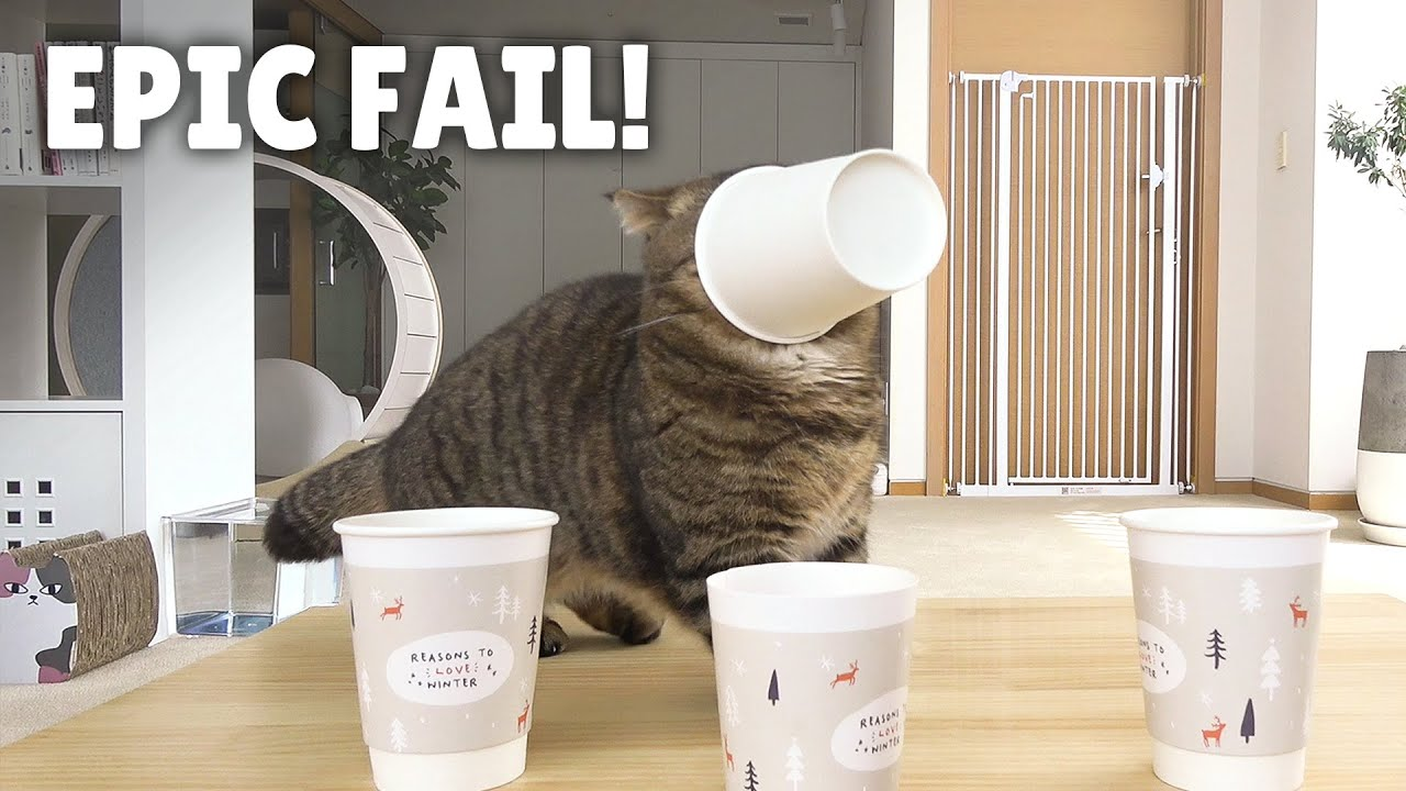 Just Your Typical LuLu Fail! | Kittisaurus