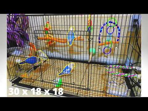 how-to-set-up-a-lovebird-flight-cage-|-perfect-cage-size-for-lovebirds-/-small-birds