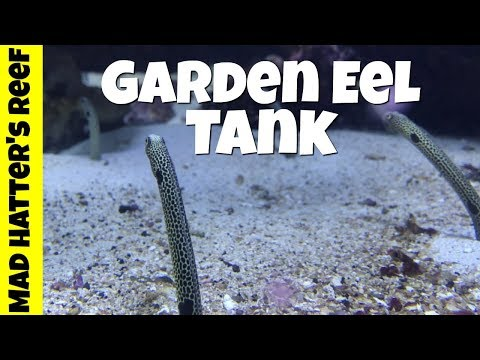 Garden Eel Tank And Cuttlefish Tank @ The Dallas World Aquarium