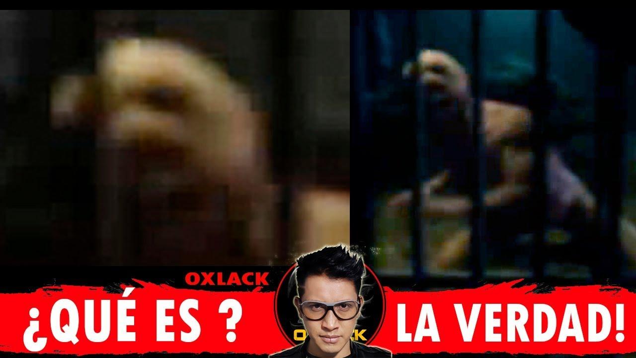 Video Filtrado De Un Reptiliano Provocó La Caída De Youtube Noticias Locales Policiacas Sobre México Y El Mundo El Sol De Morelia Michoacán