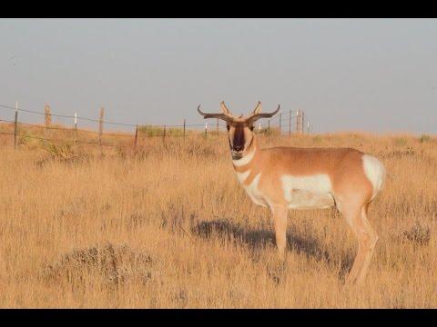 2015 Wyoming  DIY Antelope Hunt