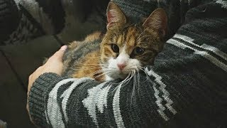 Купить кофе и забрать домой кошку предлагают в котокафе в Чили (новости)