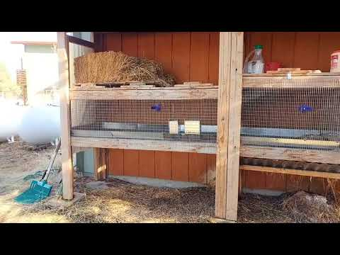 How To Determine Your Best Rabbit Housing | Meat Rabbits 103