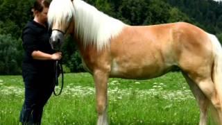 Sephorda meine 1.große liebe in Pferdeform :-)