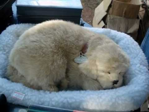 Cachorrinho Dormindo Stuffed Toy Dog That Sleeps Youtube
