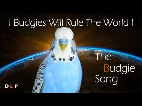 THE BUDGIE-SONG! Budgies will rule the world!