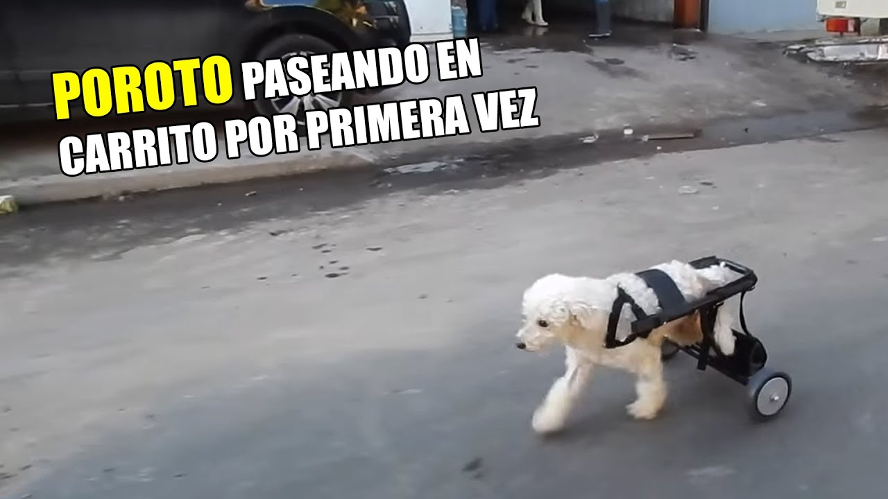 Carrito para perros run again dog wheelchairs youtube for Carritos para perros