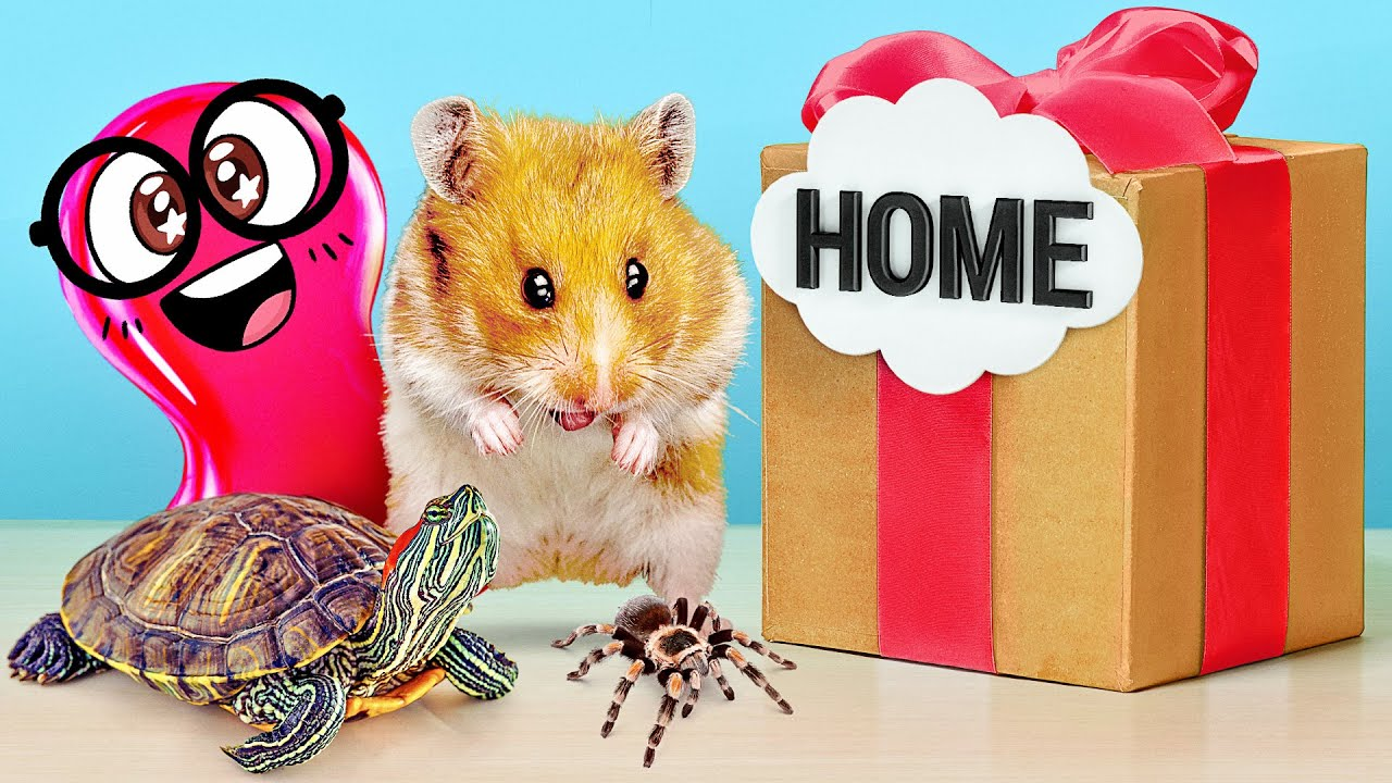 How to Build Cool Homes for Hamster, Spider or Turtle