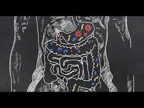 О.А. Бутакова и Ю.А. Фролов. Кишечник – второй мозг. Ферменты. Бактерии