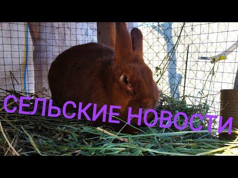 Сельские новости//Жизнь в деревне!!!