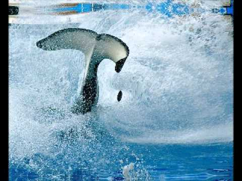 RELAX OR STUDY WITH NATURE SOUNDS: Whale Song and Ocean Wave