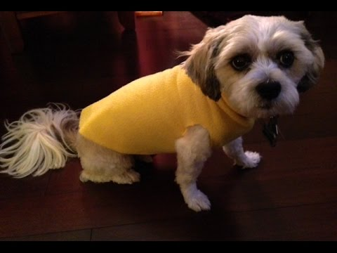 DIY No Sew Dog Sweater - YouTube