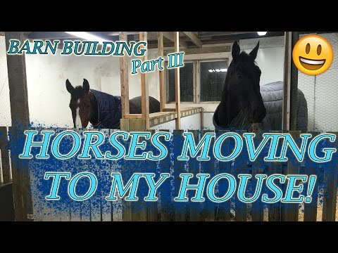 BARN BUILDING Part 3- HORSES MOVING IN!!
