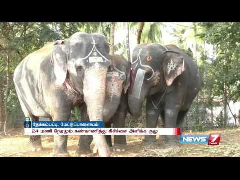 All set for elephant rejuvenation camp at Mettupalayam elephant sanctuary | News7 Tamil