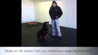 Rottweiler On 4th Lesson! K9 Training Maryland