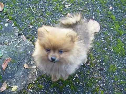 Puppy Pipkin -