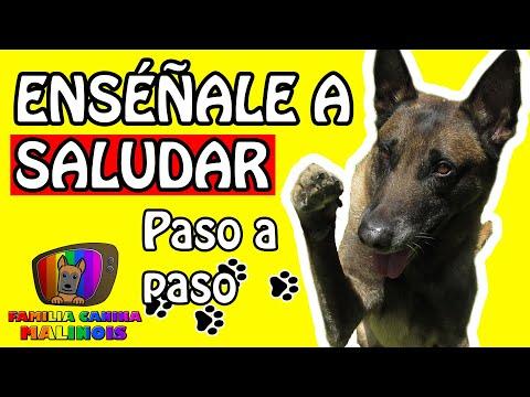 CÓMO ENSEÑAR A Un PERRO A SALUDAR (El SALUDO/LEVANTAR LA PATA)   Adiestramiento Canino