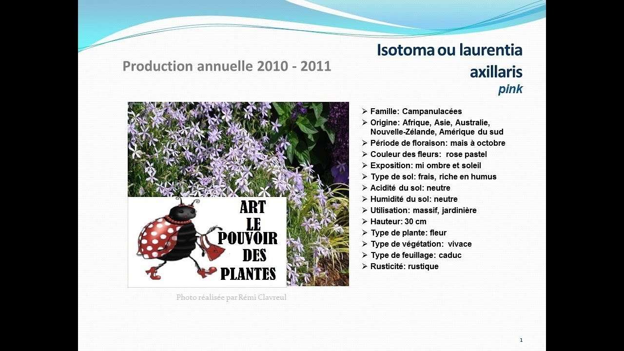 Conseils jardinage isotoma ou laurentia axillaris pink for Technique jardinage