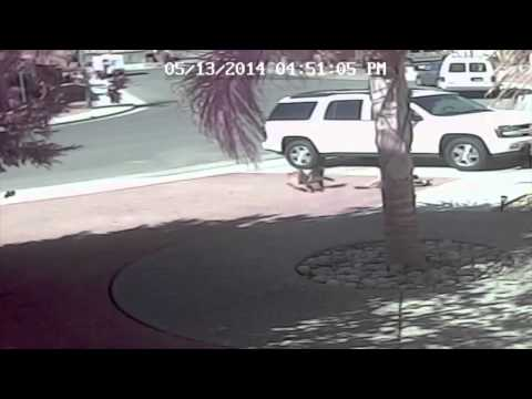 Cat Saves Boy from Dog Attack