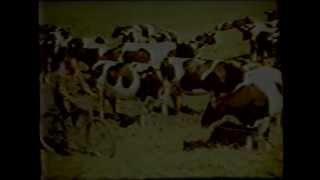 видео МАШИНЫ, ОБОРУДОВАНИЕ И ПРИСПОСОБЛЕНИЯ ДЛЯ СОДЕРЖАНИЯ КРУПНОГО РОГАТОГО СКОТА. Машинное доение коров