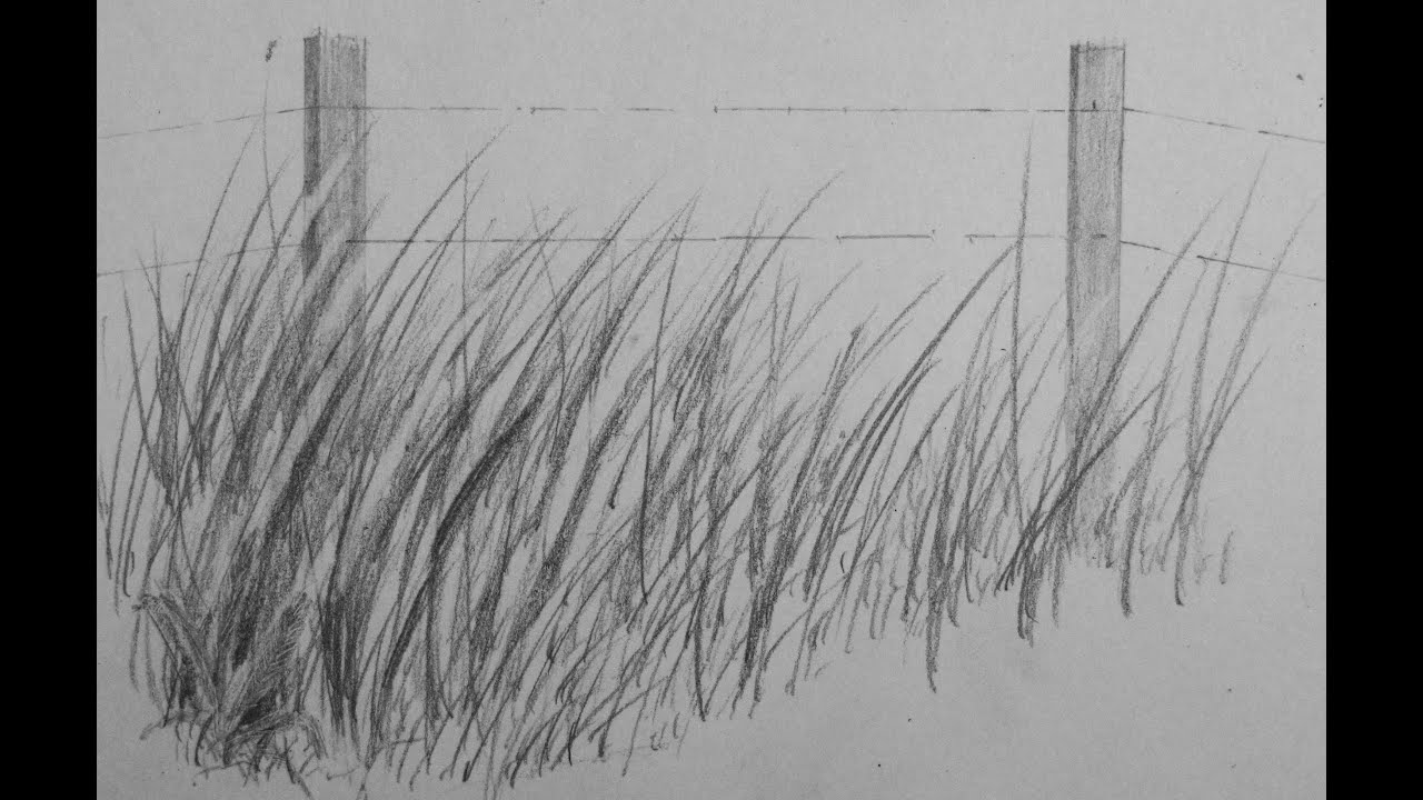 How to draw realistic tall grass