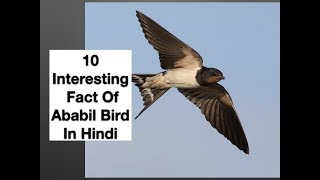 Video 10 Interesting Fact Of Ababil Bird In Hindi download MP3, 3GP, MP4, WEBM, AVI, FLV Agustus 2018