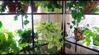 Houseplant Tour | Living Room Plant Update | January 2019