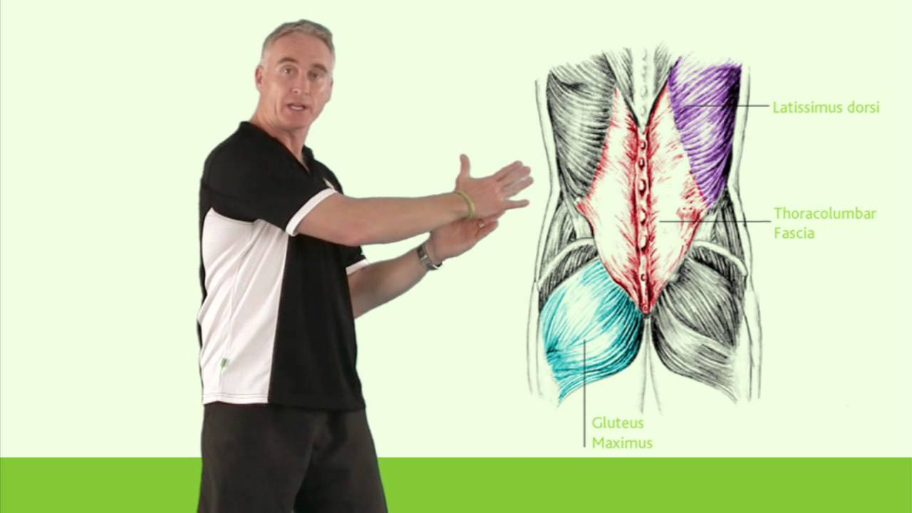 Thoracolumbar Fascia - YouTube