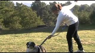 Versatile Dog Leash From Sadie's Pet Products