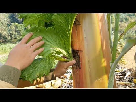 Amazing Farming ideas