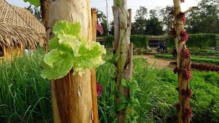 Amazing Farming ideas for Your Home & Garden - Growing vegetables in a banana tree