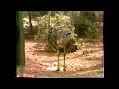 Zoo de La Palmyre en 1984 Charente-maritime France