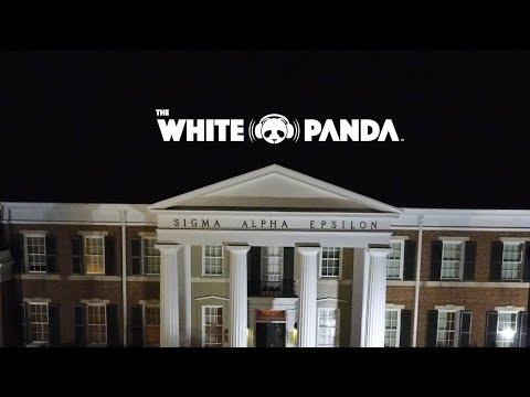 The White Panda- The University of Alabama